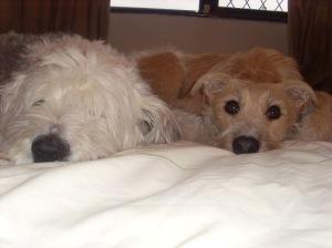 Ellie &  Pippa