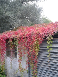 Our little shed in all its autumnal glory!